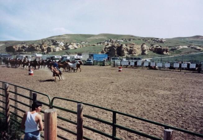 WOS Bucking Horses